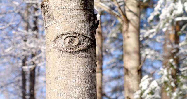 Vilket träd gör starkast intryck?